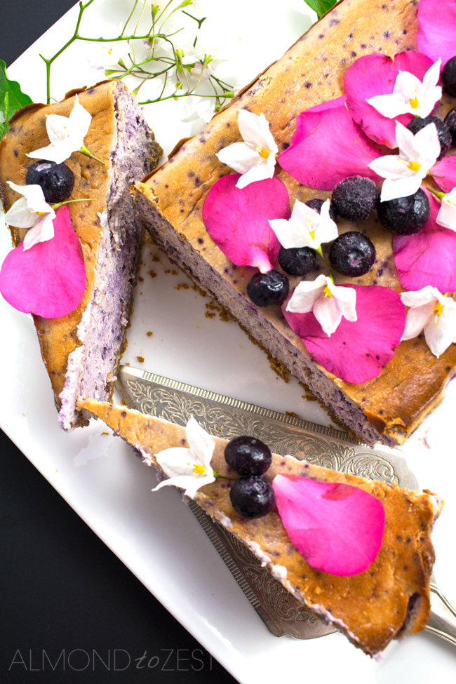 Blueberry Cheesecake Loaf - Extremely smooth & creamy with gingersnap cookie crust! Delicious & vegetarian!!